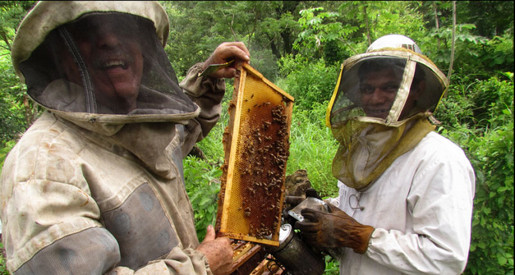 New Pollinator Protection Program Bees for Trees