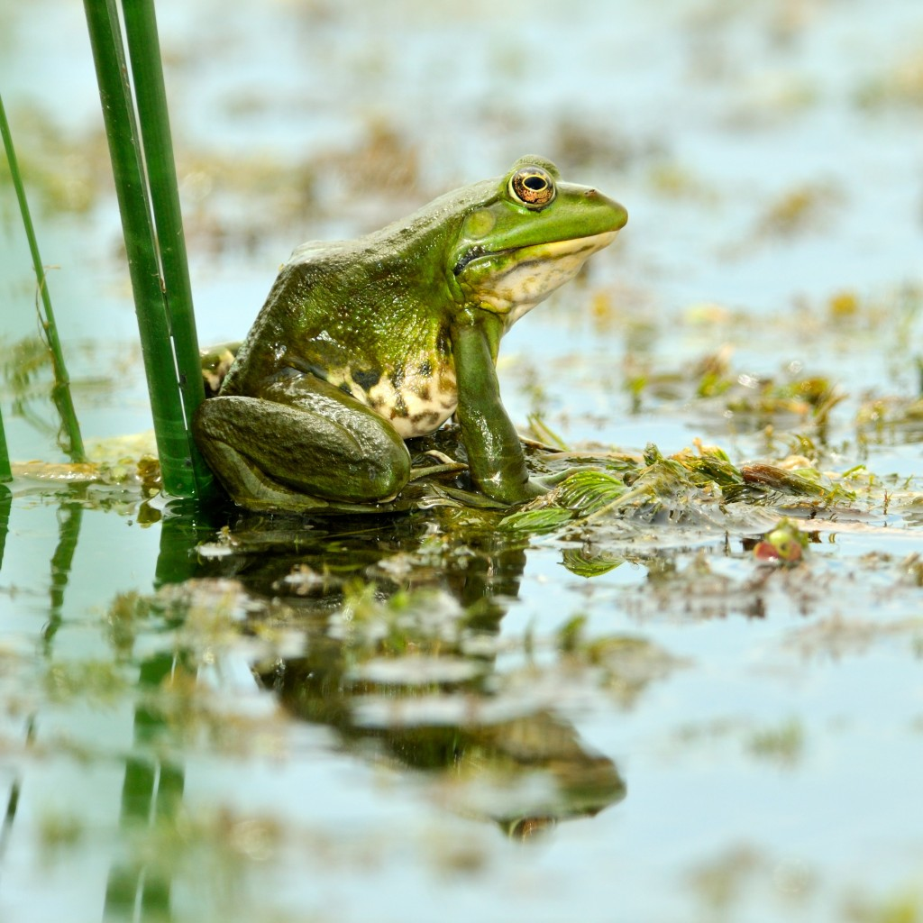 Frog courtesy of Shutterstock