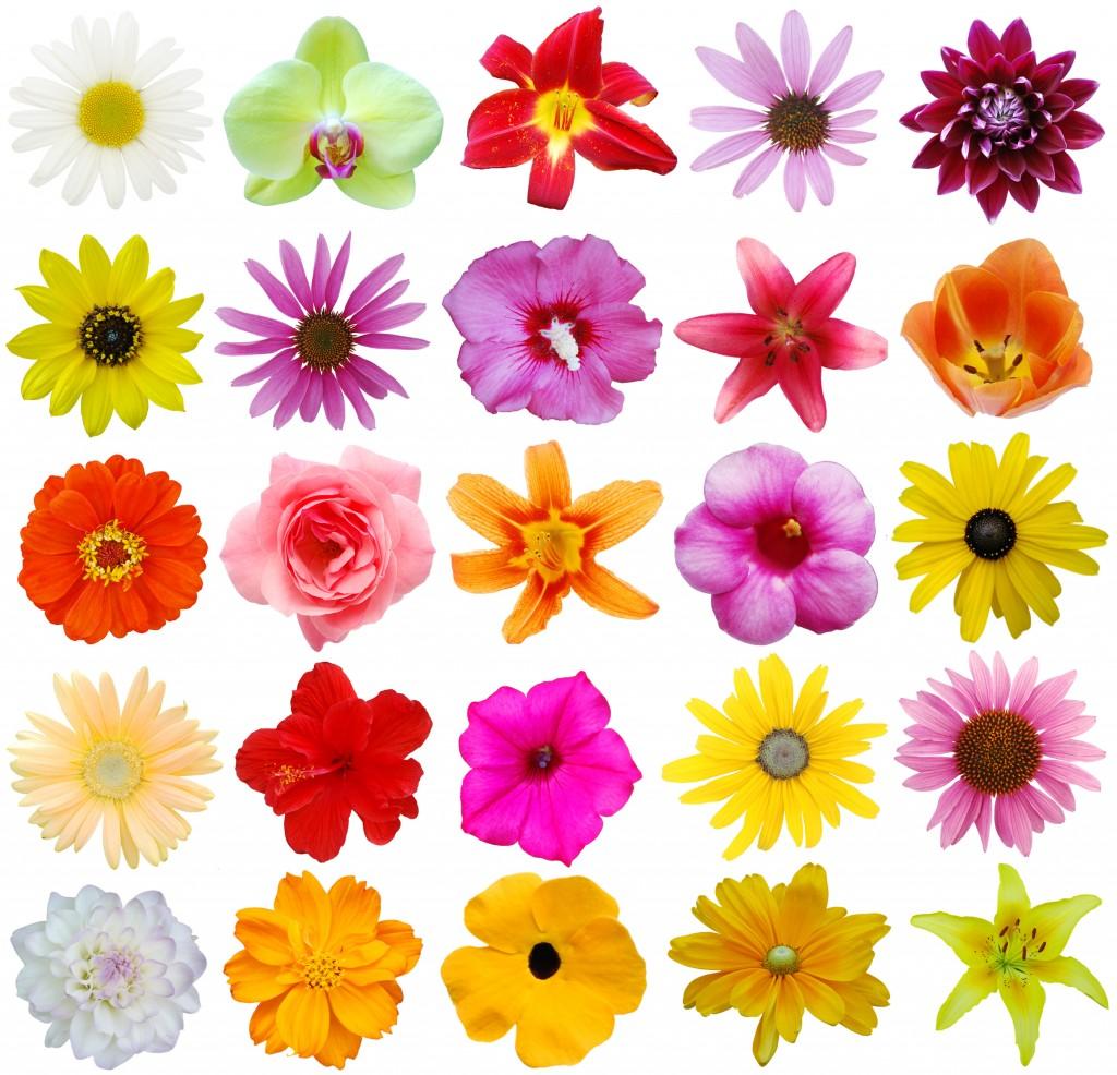 Flowers by Shutterstock