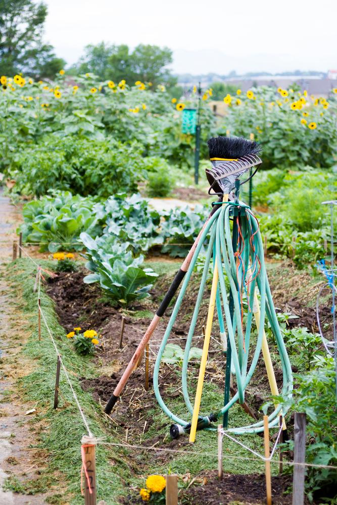 Community garden image courtesy of Shutterstock