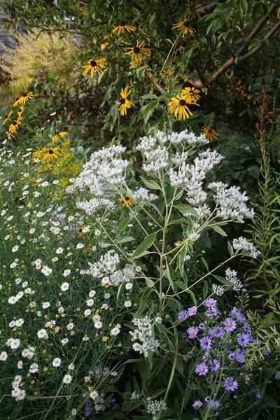 benjamin Flowers