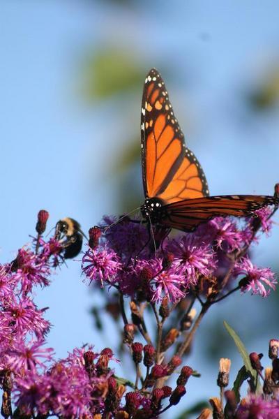benjamin Monarch on Ironweed
