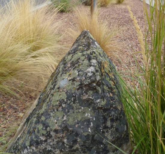 Big rock adding textural interest (and diverse lichens) to a xeriscaped parking strip.