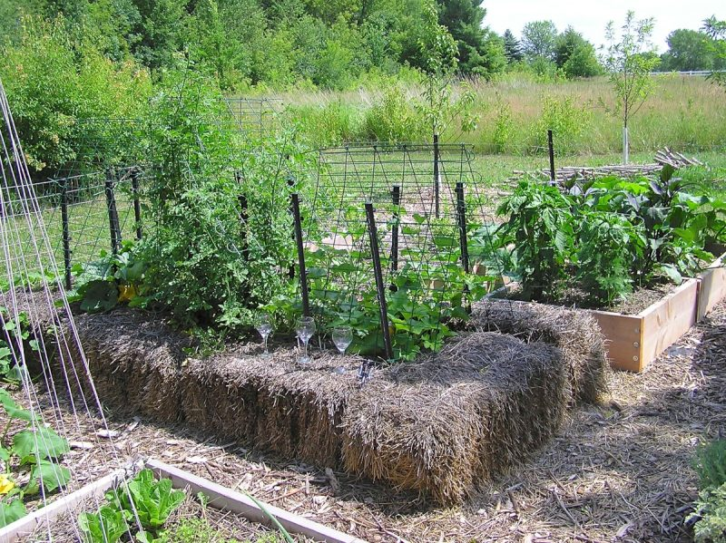 Tale of a strawbale raised bed gardenrant Where to buy straw bales for gardening