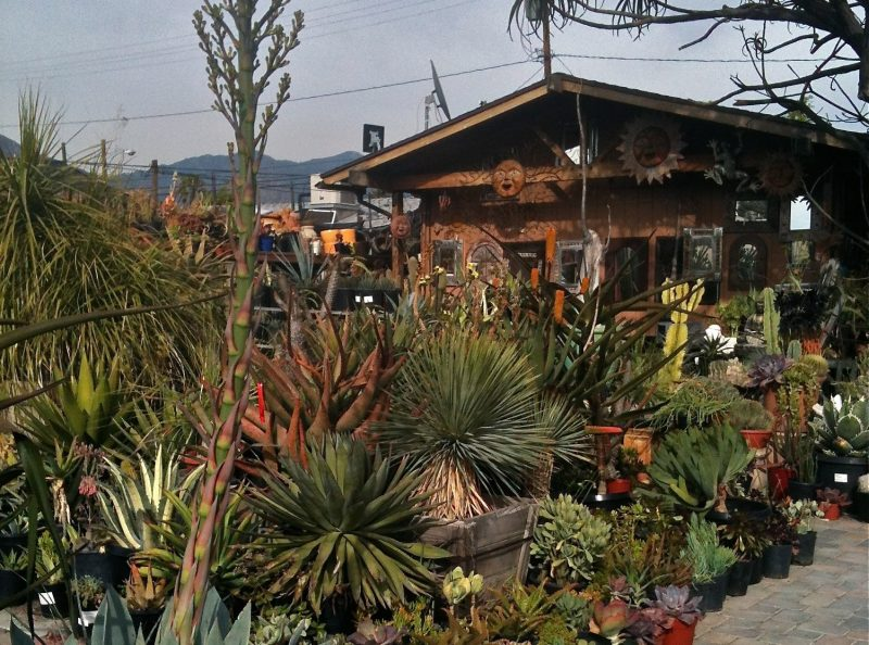 This Los Angeles Area Succulent Nursery Was Where Horticultural Fashionistas Came To See And Be Seen