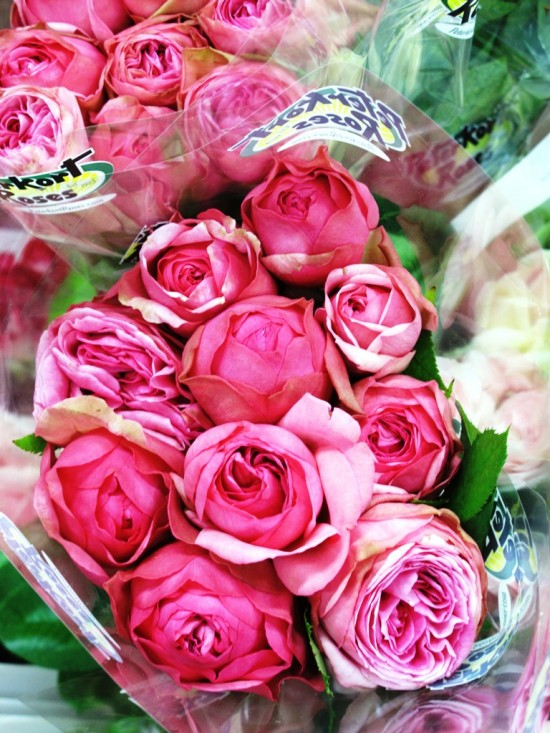 Pink garden roses, from Peterkort Roses in Oregon.