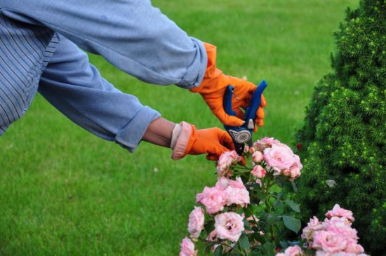 Pruning image courtesy of Shutterstock