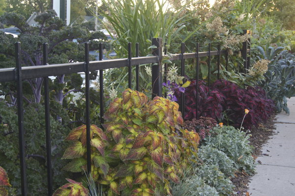 Edible Kale And Raspberries Mingle With Decorative Coleus, Fleeceflower,  Gazania, And Grasses In A Hellstrip Garden Alongside The Parking Lot Of The  Seward ...