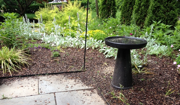 Garden Dilemma Under The Bird Feeders Gardenrant