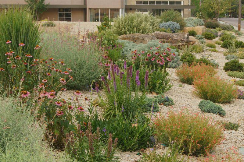 sony dsc - Water Conservation Garden