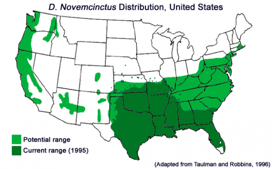 Armadillos have marched on since Taulman and Robbins made this 1996 projection.