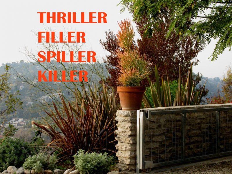 I\'m the Thriller Filler Spiller Killer! | GardenRant