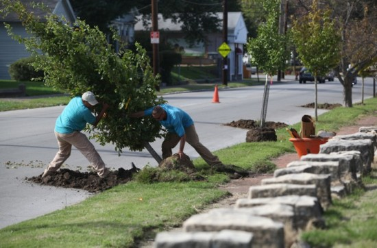 Planting trees in the Portland neighborhood. Mike Hayman photo.