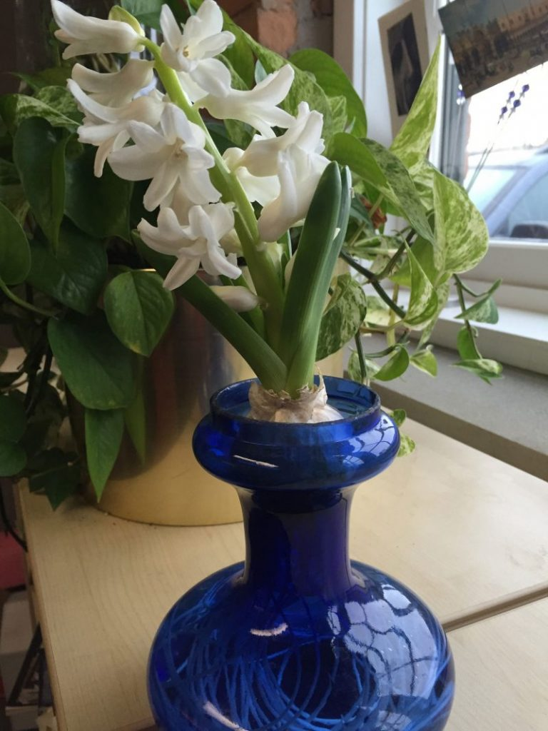 This is Madame Sophie, from Old House Gardens (in my office)