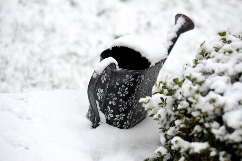 Snowy garden courtesy of Shutterstock