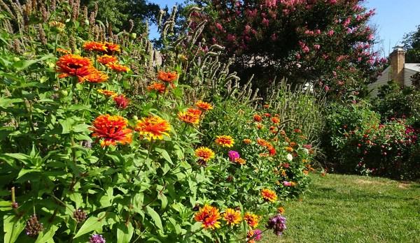 A variety of Pollinator Zinnias_edited-1