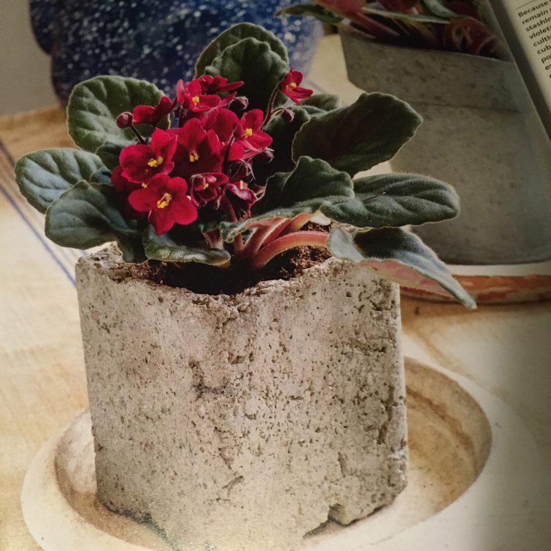 A houseplant whisperer | Garden Rant