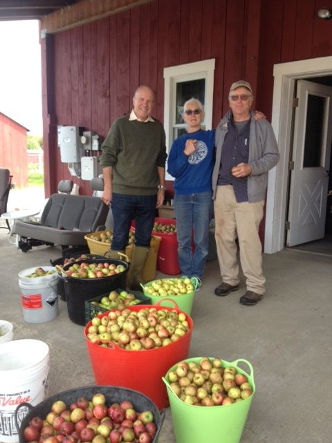 apple scavenging