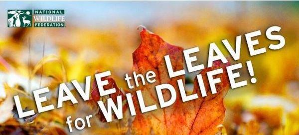 nwf leaves