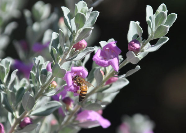 trendy-bee