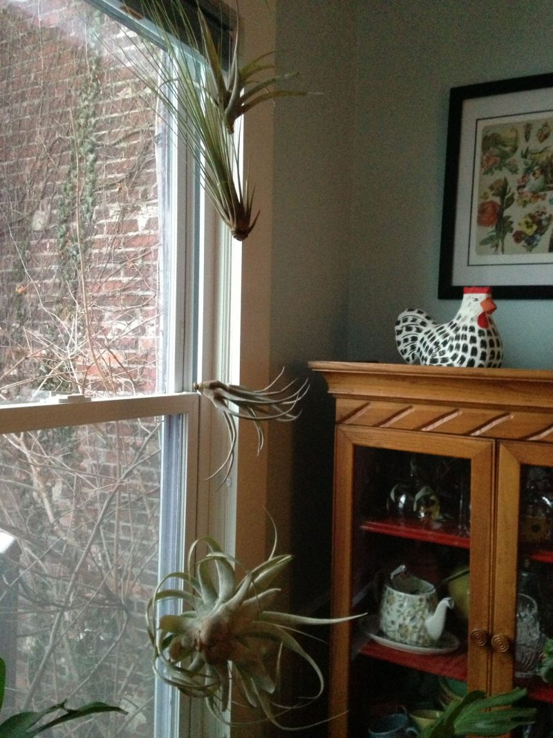 Hanging Plants Without The Hangers Gardenrant
