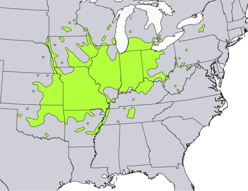 Distribution of Kentucky coffeetree