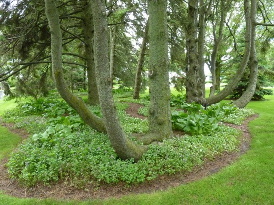 Some of the best lawn islands I've seen are in Garden of the Woods in Manitowoc, Wisconsin.