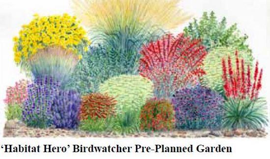 Eastern Gardener Iso Desert Plants Gardenrant