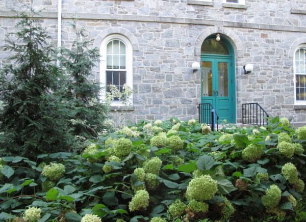 Hydrangeas,  Scott Arboretum, Swarthmore College