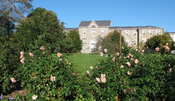 Roses at Scott Arboretum, Swarthmore College