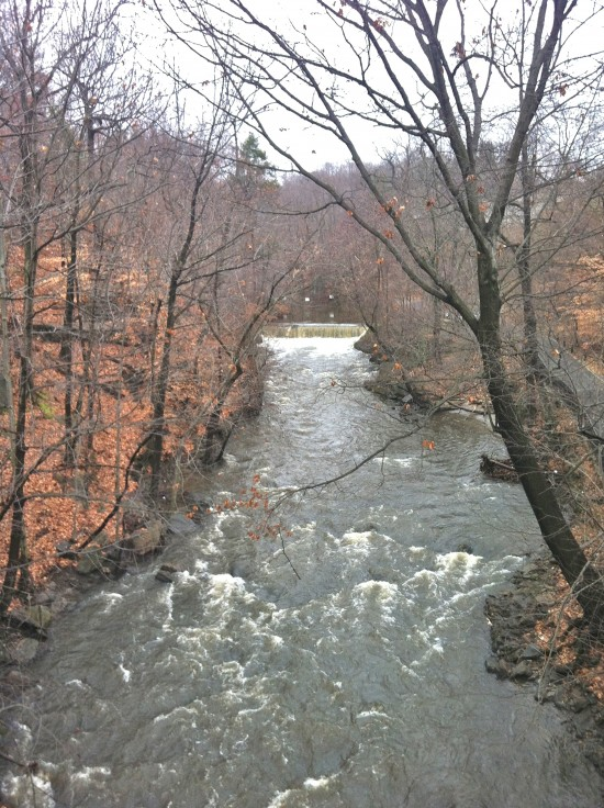 Bronx River gorge in the New York Botanical Garden forest