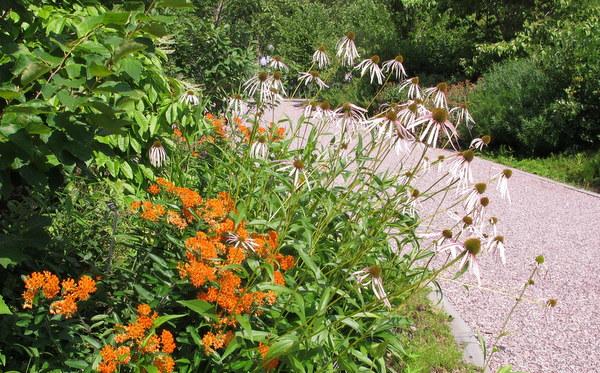 Regional Native Garden at U.S. Botanic Garden in DC