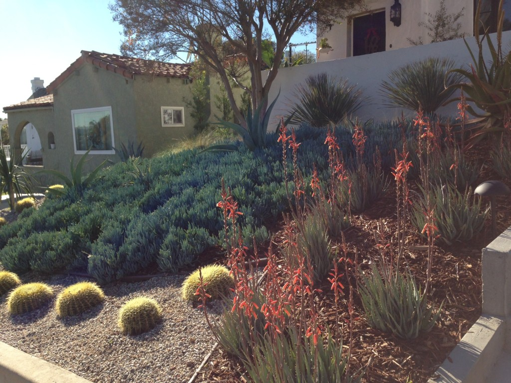 Another simple, clean, straightforward, WELL-DESIGNED drought tolerant garden. The difference is important!