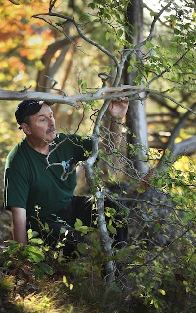 Daniel Boone collecting dwarf hackberry seed in Adams County, Ohio. Mike Hayman photo.