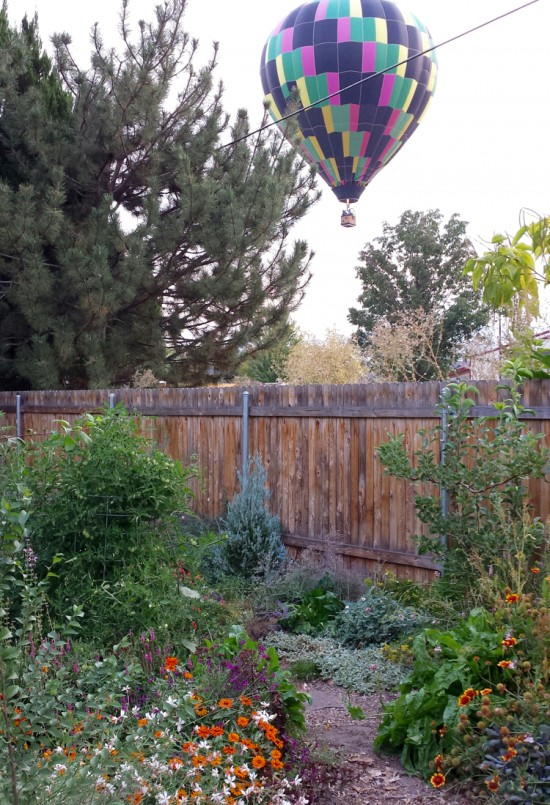 The ephemeral flight of hot air balloons over my garden just after sunrise provides a sense of place. (Boise is a ballooning hot spot.)