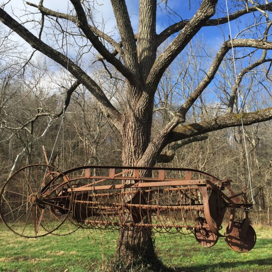 Walnut tree with mobile 121515