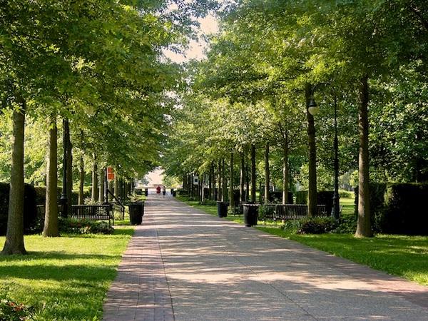 Grand allee in Vander Veer Botanical Garden