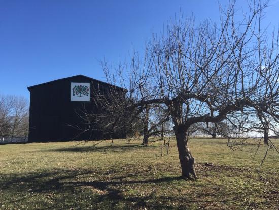 Stayman Winesap heirloom apple at Shaker Village, Mercer County, Kentucky.