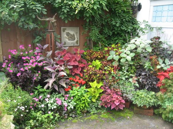 Lush garden in Buffalo