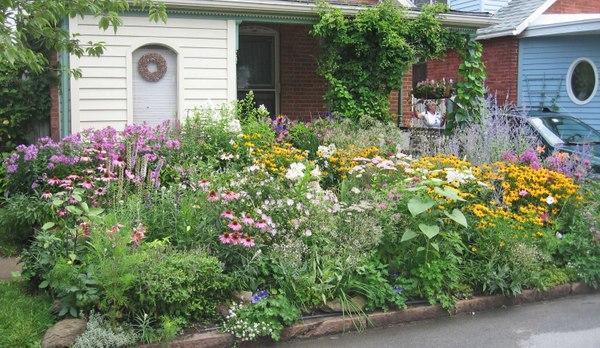 Curbside garden in Buffalo