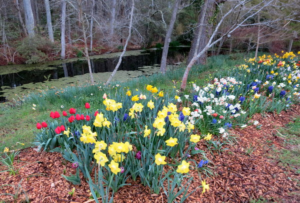 Spring blooms in the garden of Brent and Becky Heath
