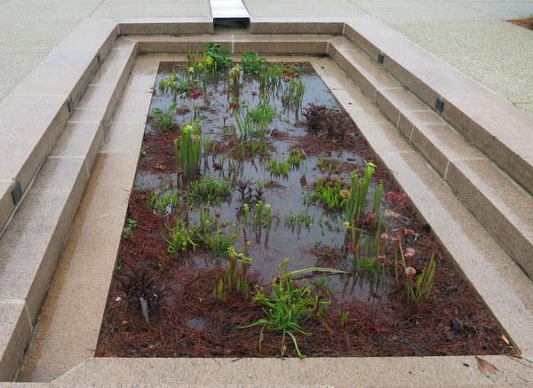Bog garden in Bartholdi Garden at U.S. Botanic Garden
