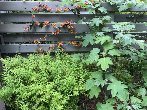 Privacy screen with shrubs and vines