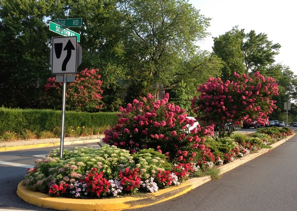 Median strip landscape with mixed planting