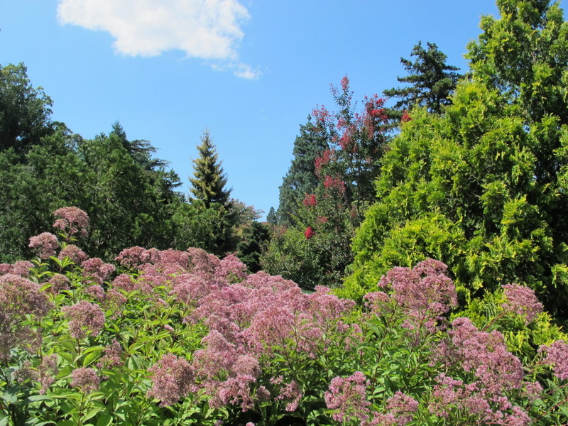 Conifer Collection at the National Arboretum
