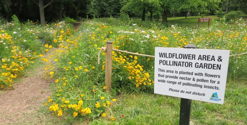 Pollinator garden in Greenbelt, MD