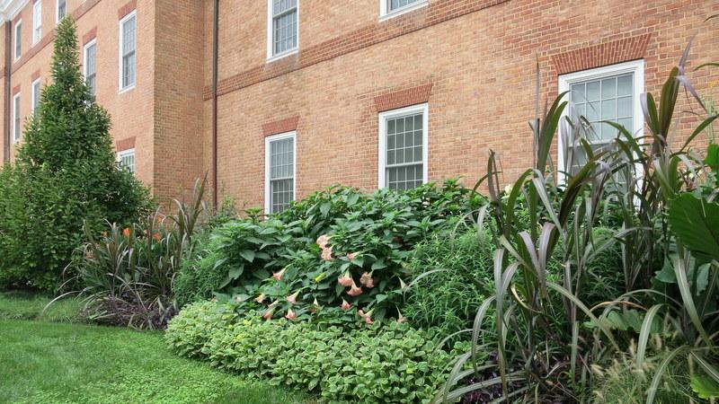 Tawes Plaza garden - U.Maryland College Park campus