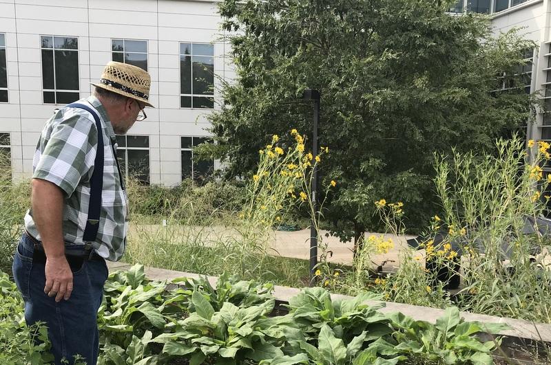 Sam Bahr tends Tawes Plaza garden - U.Maryland College Park campus