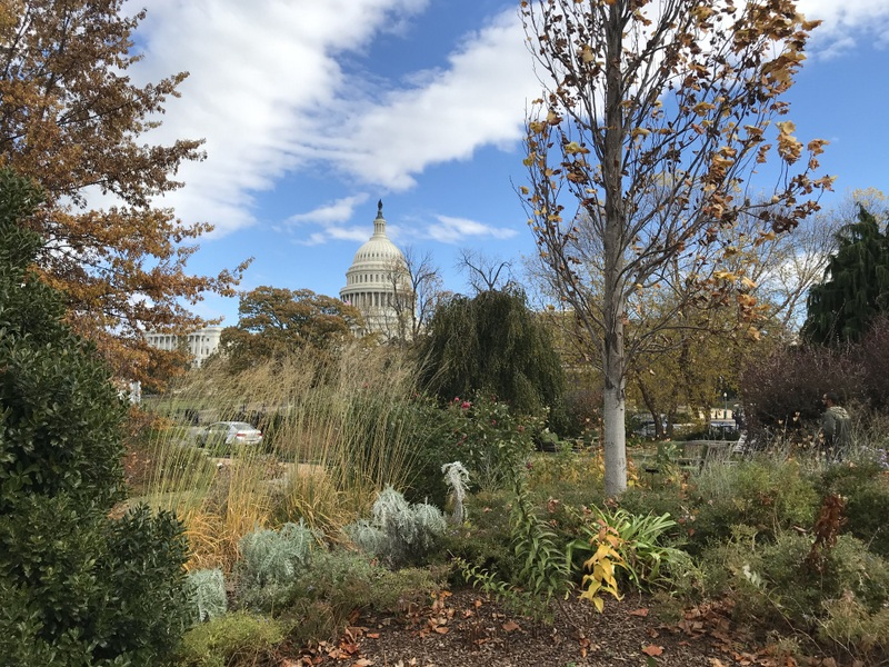 US Botanic Garden in winter