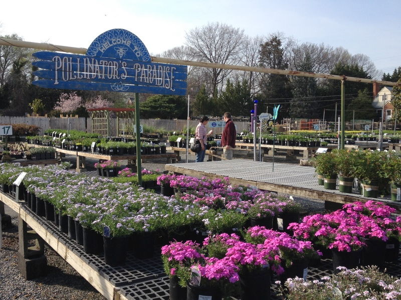 Behnke Nurseries in Beltsville, Maryland